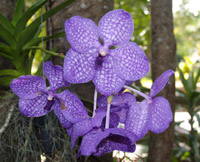 Purple-Orchid.jpg
